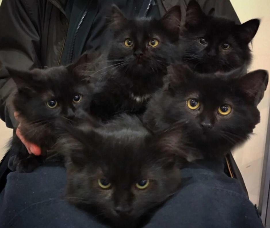 Кошечка, которая жила на улицах, привела всех своих детенышей к женщине, которая ей помогла