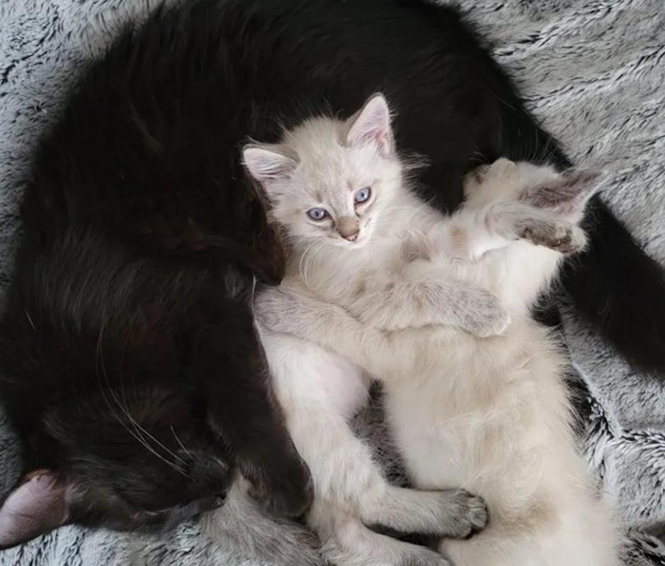 Соседи помогли беременной кошке, после того, как ее нашли оставленной возле ее дома