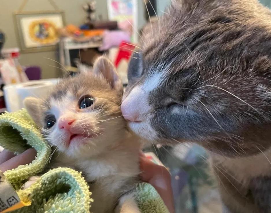 Котенок размером с ладонь учится сидеть и стоять при поддержке кошек вокруг него