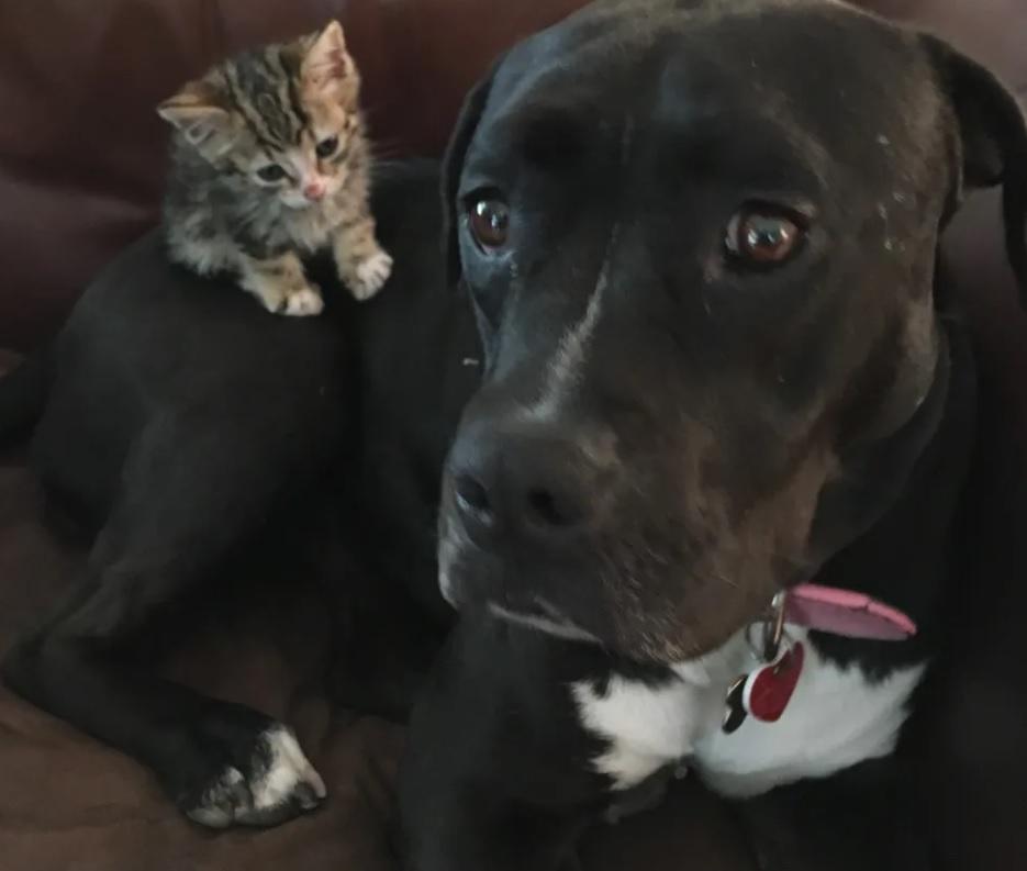 Осиротевший котенок, найденный на тротуаре, никуда не денется без своей новой мамы