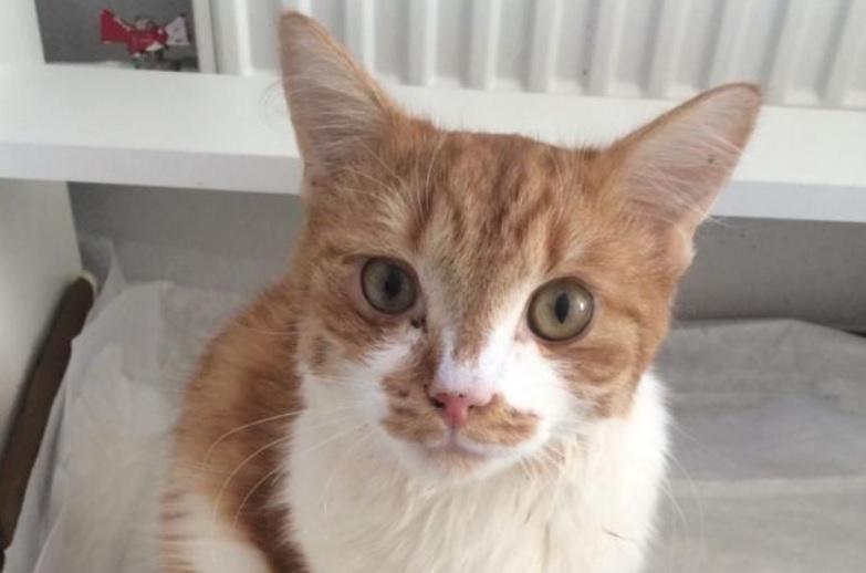 Кота, которого выбросили из окна седьмого этажа, спасли и забрали в семью