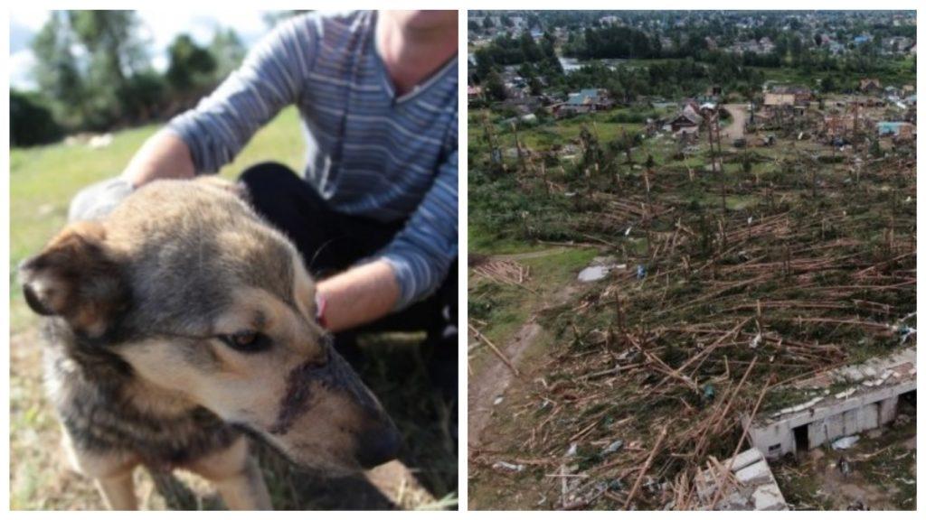 Пес вовремя предупредил семью о надвигающемся торнадо, а сам оказался под обломками дома