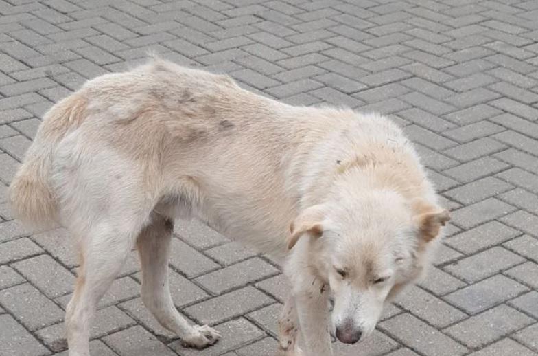 Мужчина спас собаку, которая истекала кровью
