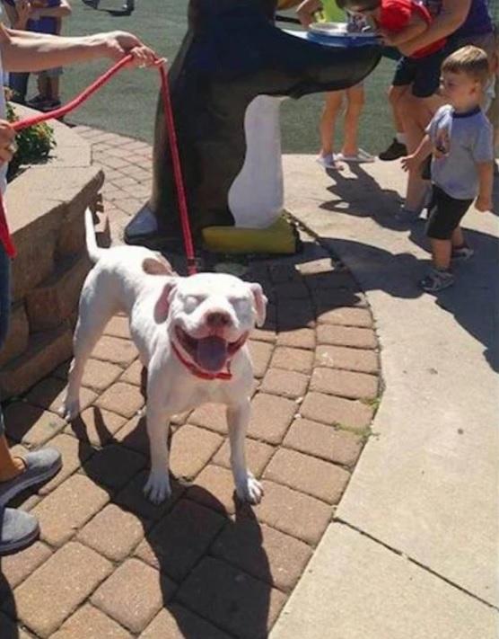 Брошенная на заднем дворе, собака не перестает улыбаться после спасения