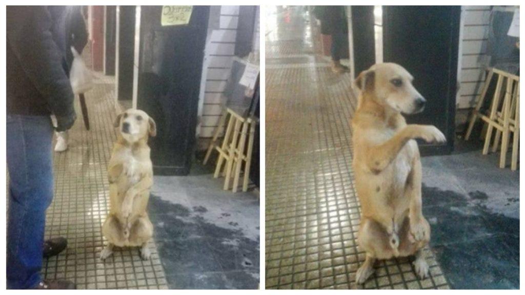 Брошенный щенок вежливо просит еды