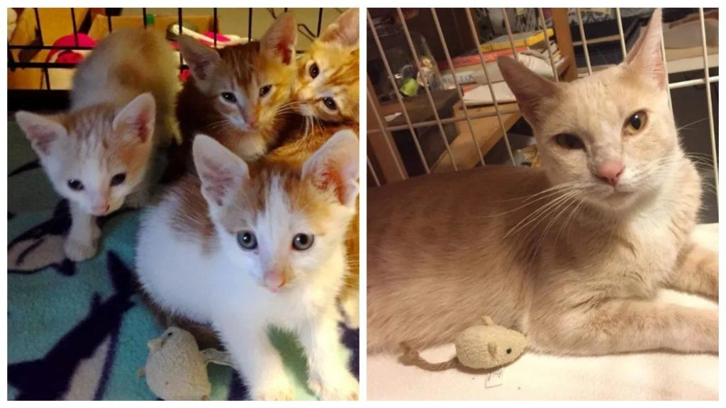 Брошенных котят в полиэтиленовом пакете спасают и воссоединяют их с мамой