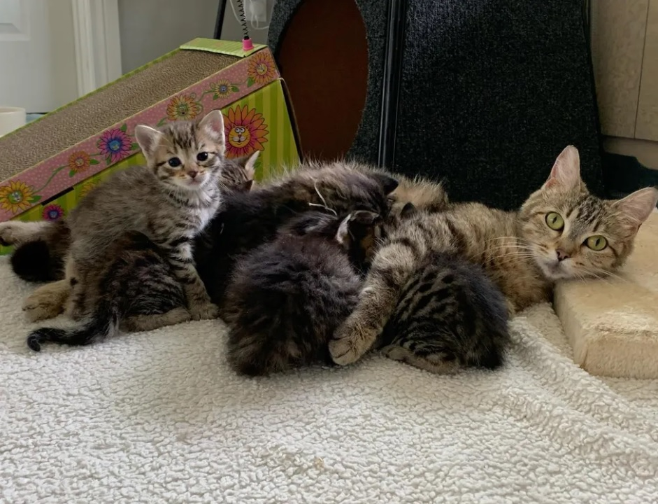 Кошка помогает ухаживать за котятами, которых ее семья приносит домой