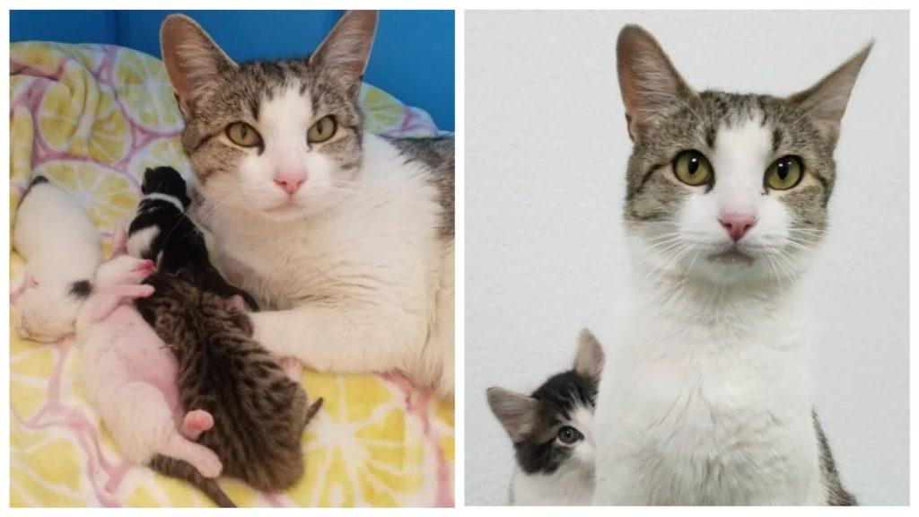 Кошка подошла к женщине за помощью, чтобы все ее котята были счастливы