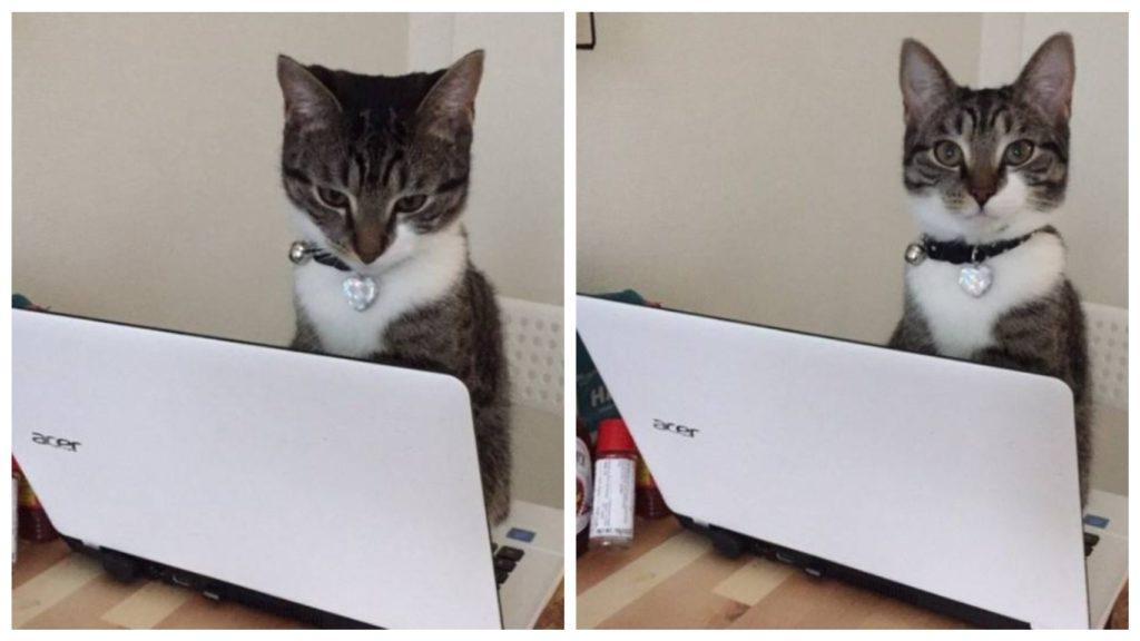 Фотографии кошек и собак, которые могут заставить нас смеяться даже после сложного дня