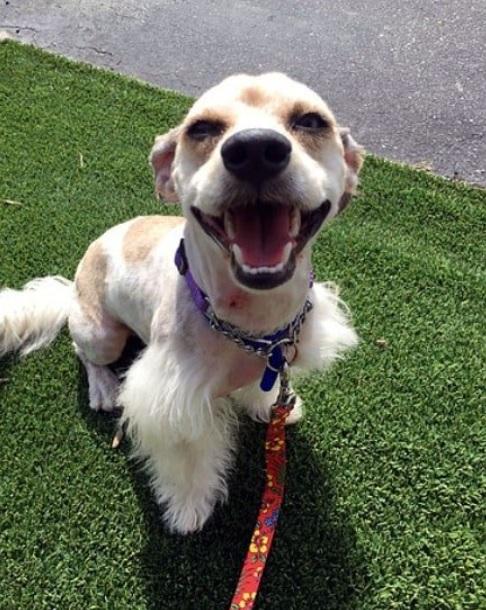 Брошенная собака на улице неделями ждала возвращения своей семьи