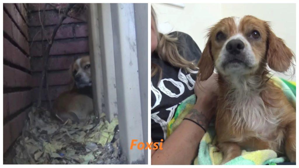 Собака, которая никогда не знала любви и которую бросил ее владелец, была спасена и теперь счастлива и здорова
