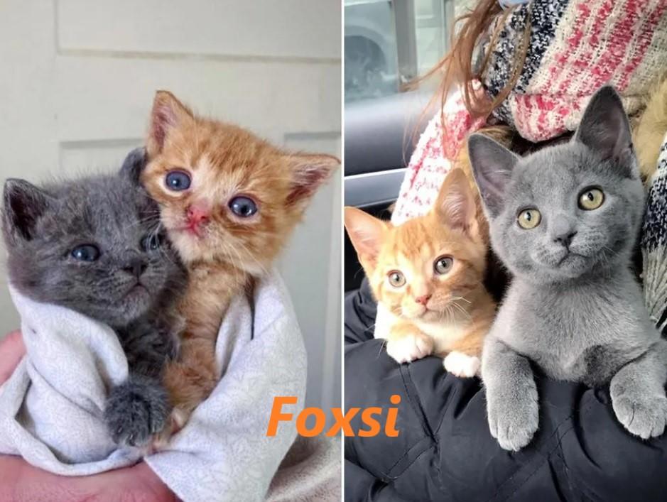 Кошка оставила своих котят на пороге семьи, малыши получили помощь как раз вовремя, и их жизнь изменилась навсегда
