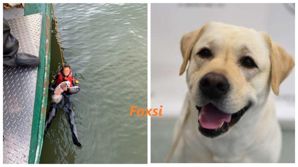 Хозяин прыгнул в реку - чтобы спасти свою собаку!