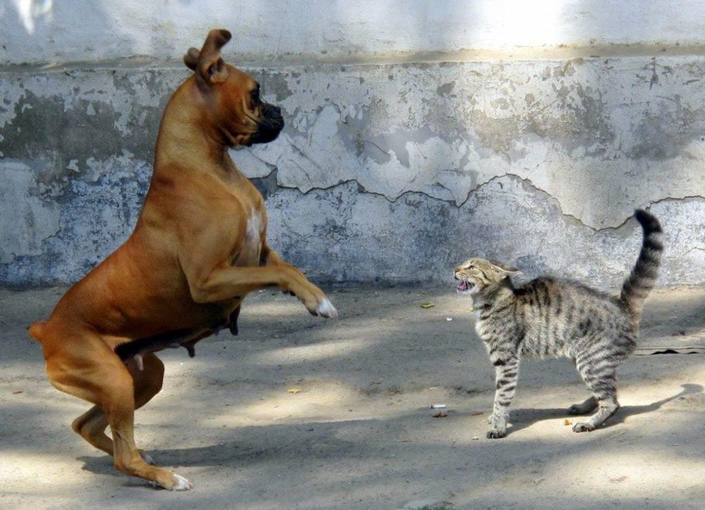 Кошка стала на защиту ребенка от собаки и ей удалось прогнать разъяренного пса