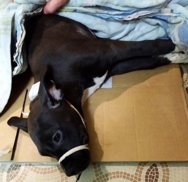 У щенка со сломанным позвоночником появился шанс на дальнейшую жизнь