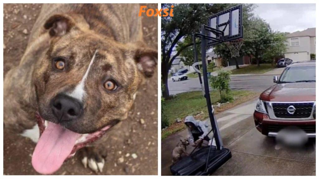 Печальный момент, когда собака брошена и отчаянно пытается следовать за своим хозяином