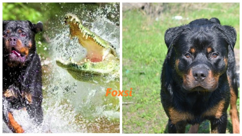 На собаку напал аллигатор, но его хозяину удалось спасти питомца