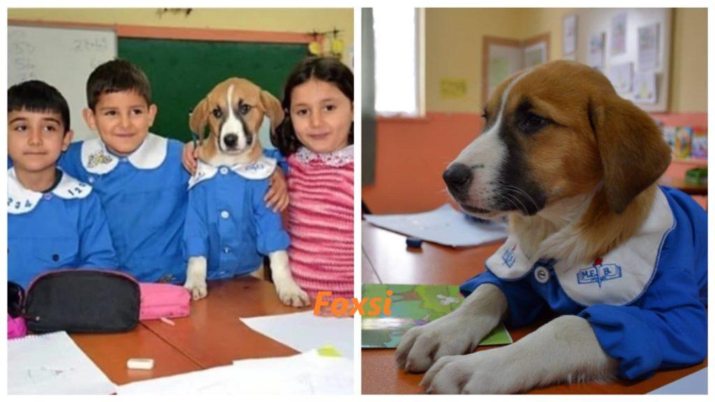 Собака, спасенная школой, носит форму и участвует в занятиях