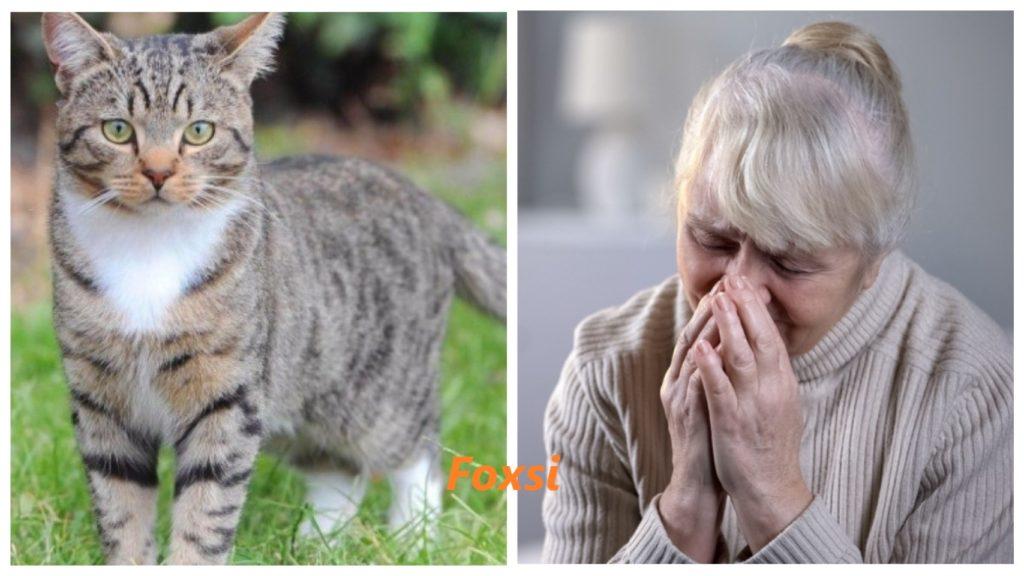 Домашний кот, спасший свою пожилую хозяйку, стал героем