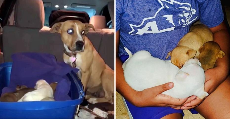 Собака брошена на стоянке со своими 9 щенками