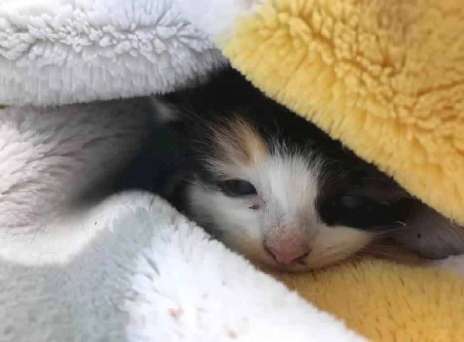 Котенок, найденный в питомнике растений, так счастлив, что ему помогли и полон решимости встать на лапки