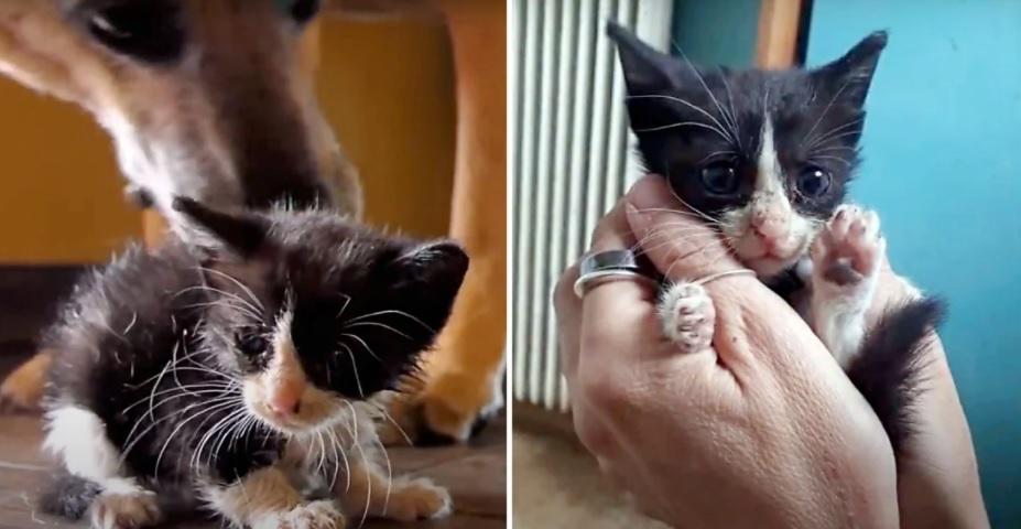 Брошенного котенка игнорировали все, кто проходил, пока его не спас самый добрый человек