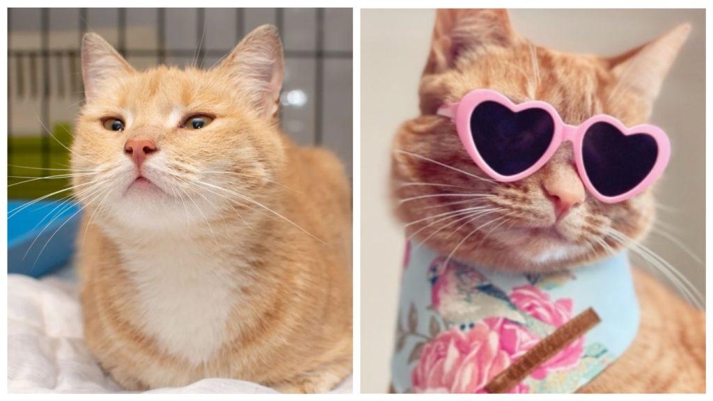 Путь от уличной кошки до домашней рыжей красавицы популярной в социальных сетях