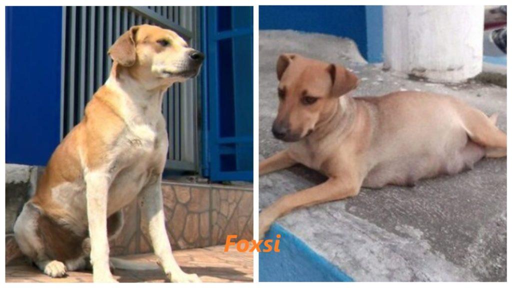 В лечебницу для животных, будущий папа-пес привел свою беременную подружку