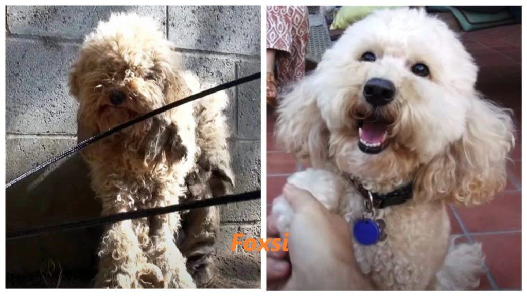 Брошенный щенок спасен и теперь имеет жизнь, которую он всегда заслуживал с семьей, которая его любит