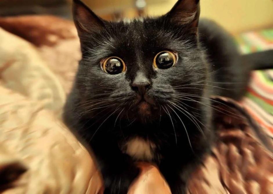 😾Откуда берутся блохи у домашней кошки и как от них избавиться