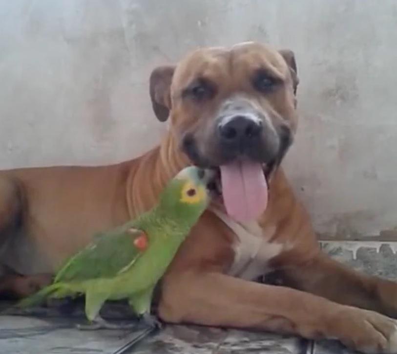Собака и попугай становятся лучшими друзьями!