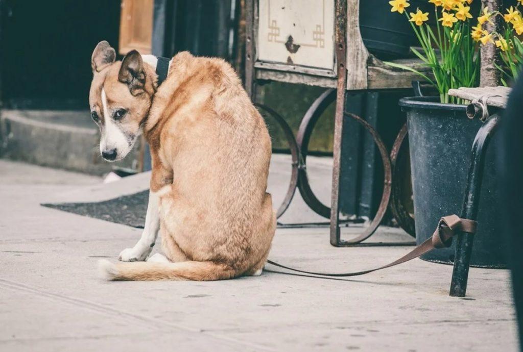 Пес, которого бросили хозяева, привязав его к остановке общественного транспорта, нашел  полюбившую его хозяйку и новый дом