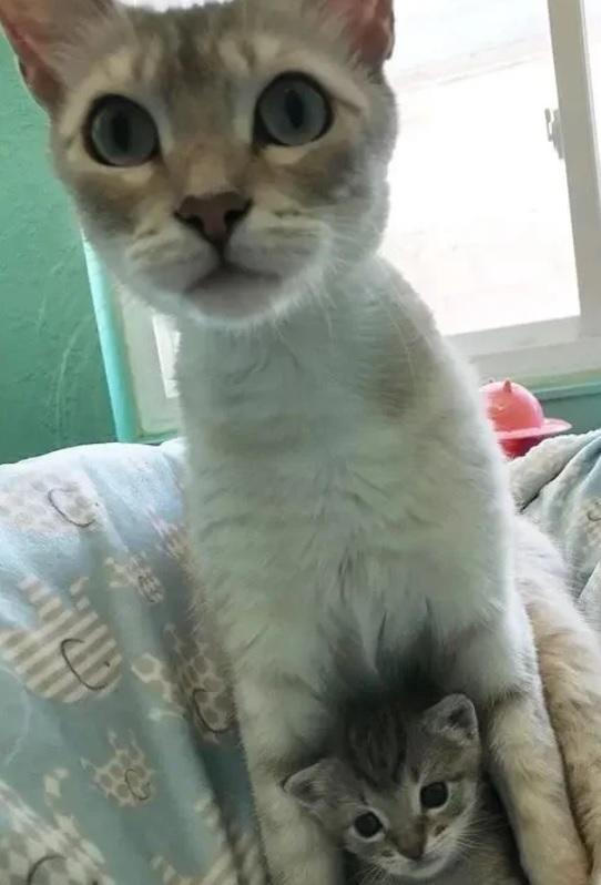 Кошка убитая горем после потери котят усыновляет котенка-сироту