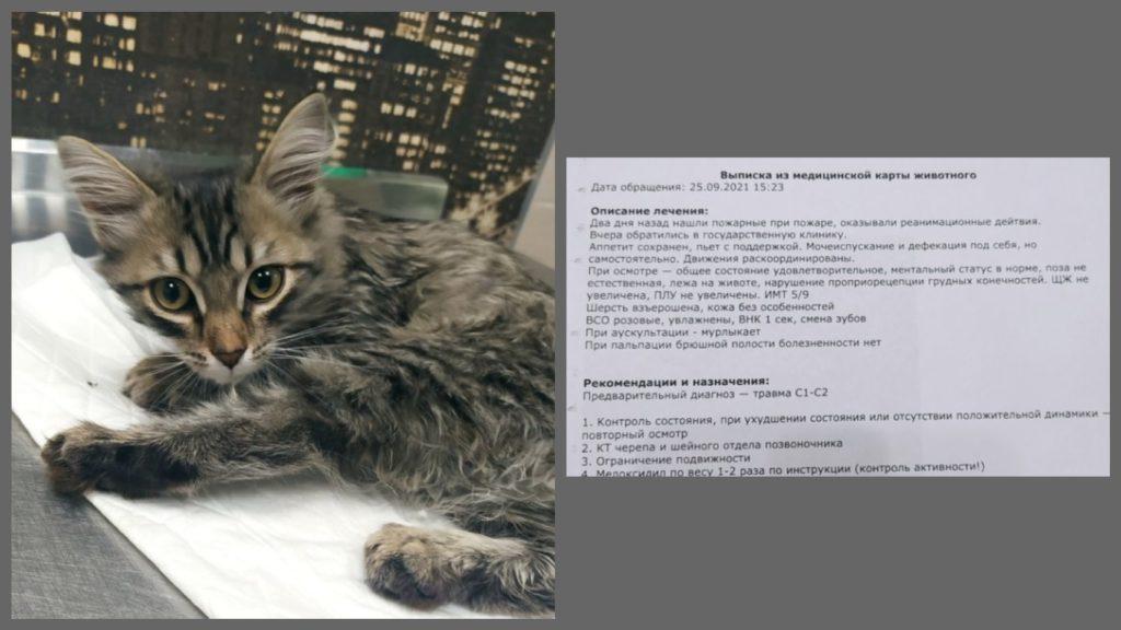 От котенка, который пострадал при пожаре, отказались хозяева